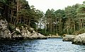 Island on Loch Morar - geograph.org.uk - 35153.jpg