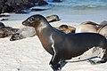 Islas Galápagos02.jpg