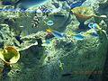 Istanbul Aquarium 57.jpg