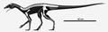 Ixalerpeton skeletal.png