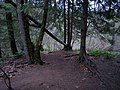 Jacob's Ladder trail behind Heritage Park - panoramio.jpg