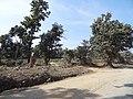 Jharkhand road to simdega, ranchi from rourkela - panoramio (2).jpg