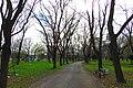 Karađorđev park - panoramio (1).jpg