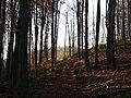 Kemence, Hungary - panoramio (6).jpg