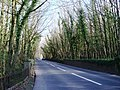 Kennels Road by Lupton old Lodge - geograph.org.uk - 369617.jpg