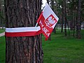 Kijów-Bykownia, polskie barwy na drzewach w polskiej częsci cmentarza wojennego - Polish flag on tree in Polish side war cemetery - panoramio.jpg