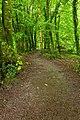 Killarney Park Forest Trail - HDR (10376613145).jpg