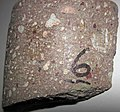 Kimberlite (Pionerskaya Pipe, Late Devonian; Arkhangelsk Region, Russia) 1.jpg