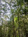 Kinabalu Park (13891098094).jpg