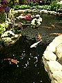 Koi pond in Singapore Changi Airport Terminal 2 - 20100309.jpg