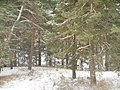 Kolosovo, Tulskaya oblast', Russia, 301351 - panoramio (6).jpg
