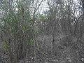 Komchén (Mérida), Yucatán (17).jpg