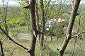 Korina 2014-04-25 Robinia pseudoacacia 4.jpg