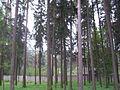 Kratovo, Moscow Oblast, Russia - panoramio (6).jpg