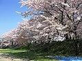 Kumagaya Manpei Park 1.JPG