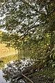 Kurcaparti tanösvény Mindszent - panoramio (29).jpg