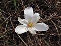 Květ 9934.jpg