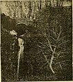 L'électricité a la portée de tout le monde (1906) (14594377147).jpg