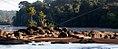 LANDSCAPE TAPANAHONY RIVER SURINAM AMAZONE SOUTH-AMERICA (32862662552).jpg