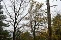 LSG Sudmerberg - Herbstwald (5).jpg