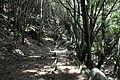 La Palma - Garafía - LP-1 - Parque Cultural La Zarza 10 ies.jpg