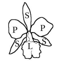 Labelle Botanique Wikipedia