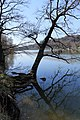 Lac de Bret - panoramio (30).jpg