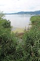 Lac de Morat - panoramio (26).jpg