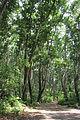 Laika ac Jozani Forest (9727673762).jpg