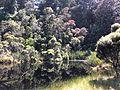 Lake Wilkie Catlins 2.JPG