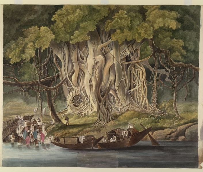 http://upload.wikimedia.org/wikipedia/commons/thumb/f/f4/Landscape_with_a_huge_banyan_tree_beside_a_river_c1825.jpg/706px-Landscape_with_a_huge_banyan_tree_beside_a_river_c1825.jpg