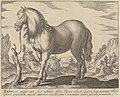 Landschap met paard uit Toscane Paardenrassen (serietitel), RP-P-OB-24.384.jpg