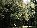 Lasy, okolice wsi Ruks Mlyn (4).jpg