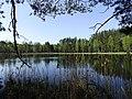 Leśne jeziorko koło wsi Czarny Piec - panoramio.jpg
