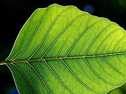 fotosentez nedir ve nasıl olur