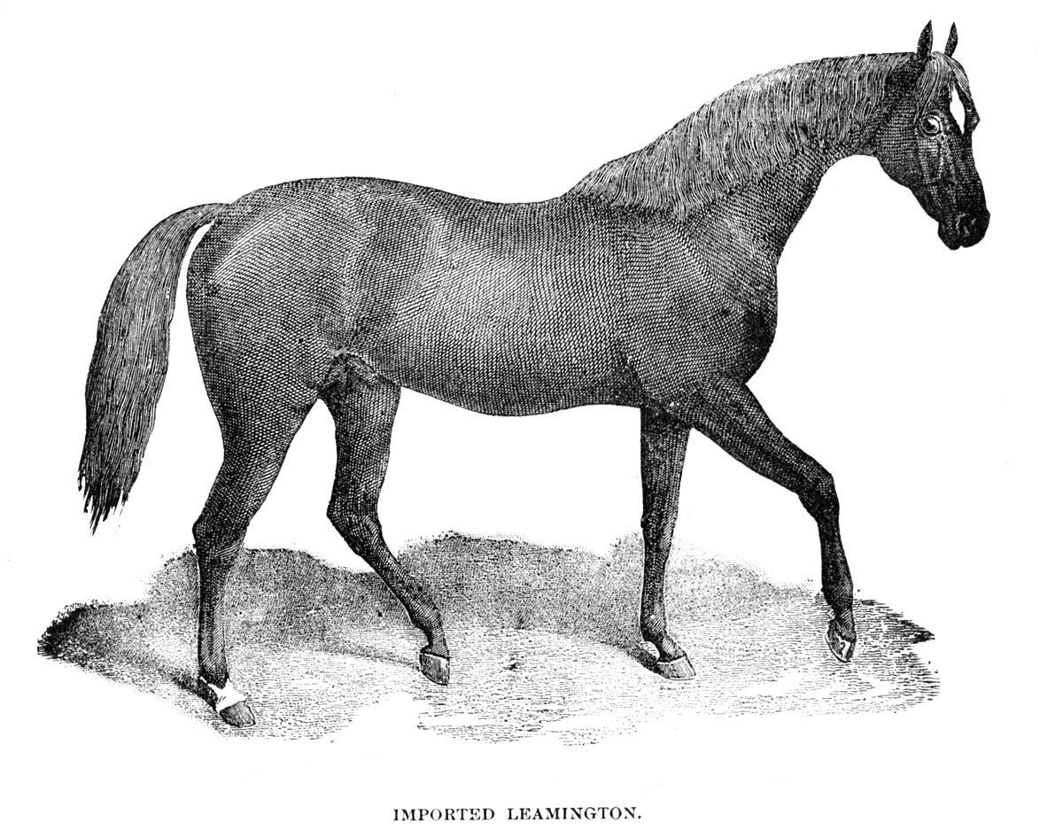 Leamington Horse Wikipedia