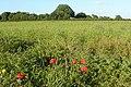 Leckhampstead Farm - geograph.org.uk - 862892.jpg