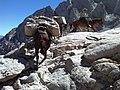 Lee on Mt. Whitney Trail2 (14531693759).jpg