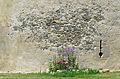 Les Herbiers - Abbaye Notre-Dame de la Grainetière 28.jpg