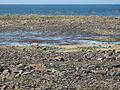 Les Pieux (Manche, Fr) bord de mer.jpg