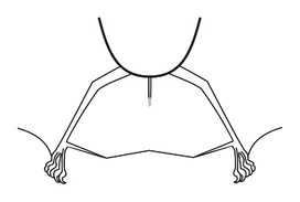 Lichonycteris Interfemoral membranes.png