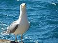 Liguria - Manarola Aprile Kframe 2015 (2).jpg
