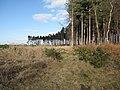 Line of trees on Croxton Heath - geograph.org.uk - 1741564.jpg