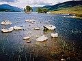 Loch Ossian, looking east - geograph.org.uk - 50242.jpg