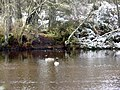 Loch Skibo and Canada geese - geograph.org.uk - 713280.jpg