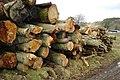 Log pile near Boreland Farm - geograph.org.uk - 1196869.jpg