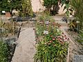 Lorto-botanico-di-padova-2016 28340423396 o 08.jpg