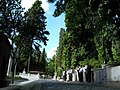 Loved One - Bir Sevilen - panoramio.jpg