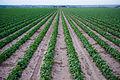 Lower Arkansas Valley Agriculture.jpg