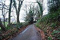 Luccombe Lane - geograph.org.uk - 1660464.jpg